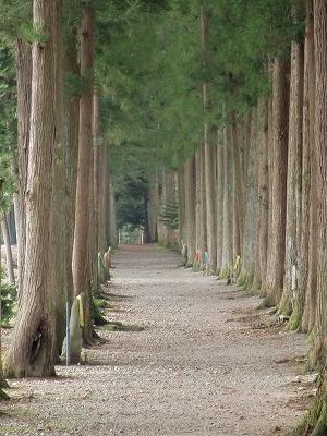 立山寺 トガ並木道